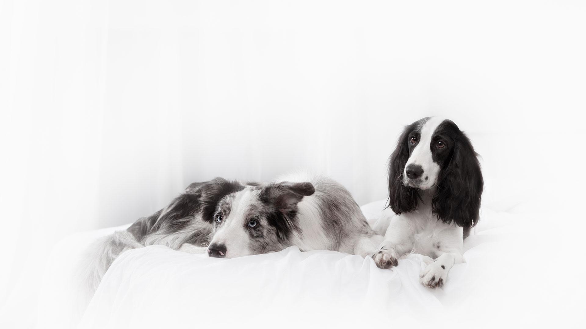 Dog Breeder