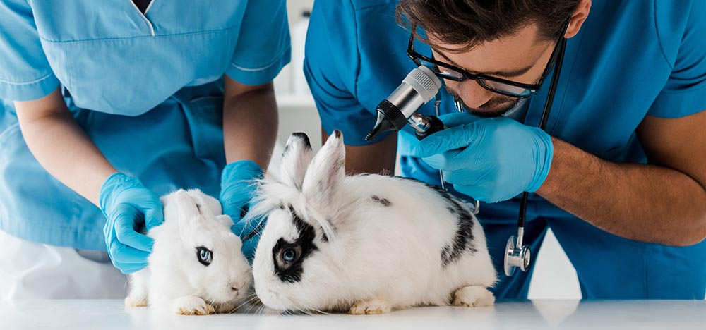 Veterinarians and rabbits