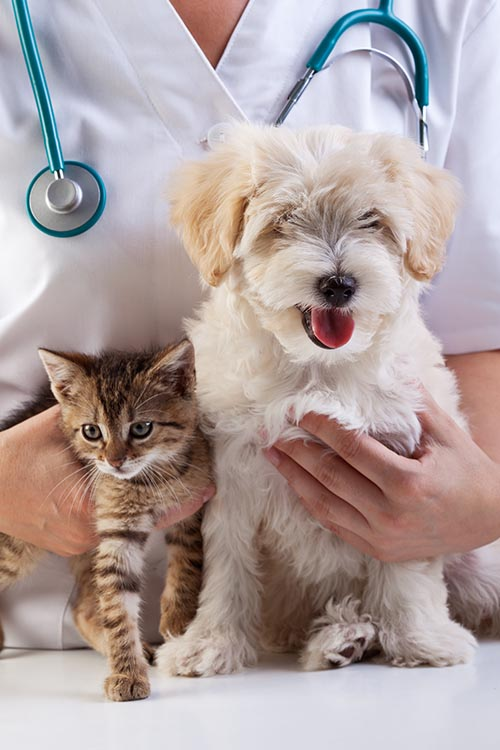 Veterinarian, dog and cat